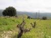 Korsika042014_014