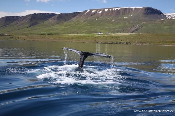 20150818-110828_Iceland2015_065
